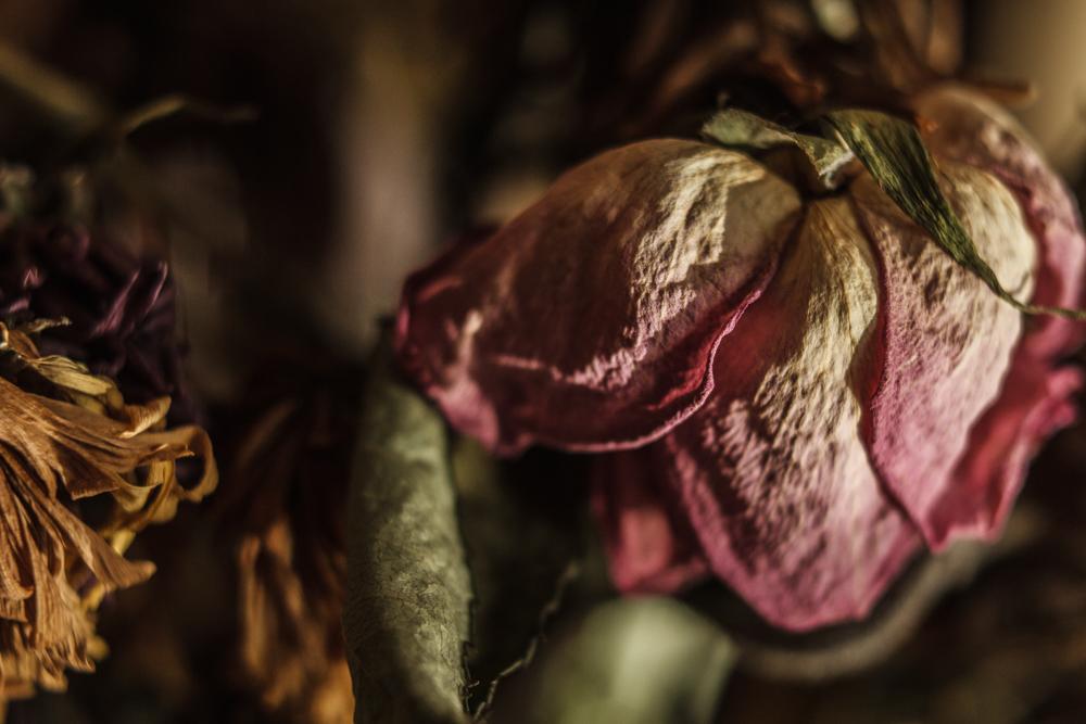 Dead Flower I